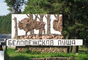 belobezhskaya_puscha